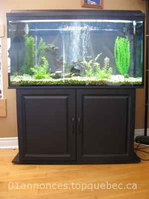 aquarium 77 gallons vendre animaux poissons 01 annonces. Black Bedroom Furniture Sets. Home Design Ideas